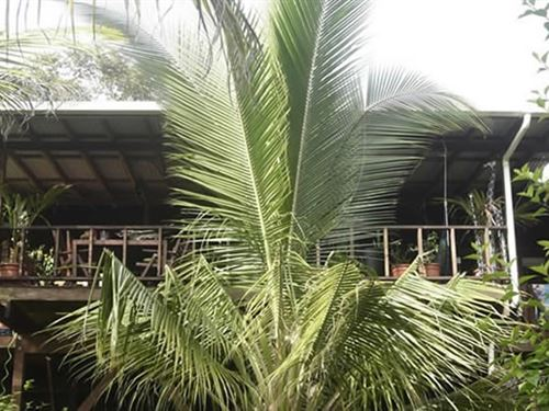 Enjoy This Island Style Home Bocas : Solarte : Panama