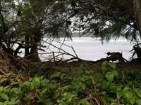 Titled Beachfront Lot, Isla : Carenero : Panama