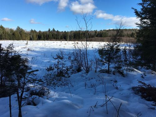 Forest Land in Garland Maine : Garland : Penobscot County : Maine