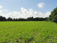 Saint George Recreational Farm : Saint George : Dorchester County : South Carolina