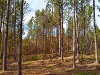 Mountainous Views, Timber & Hunting : Ridgeway : Fairfield County : South Carolina
