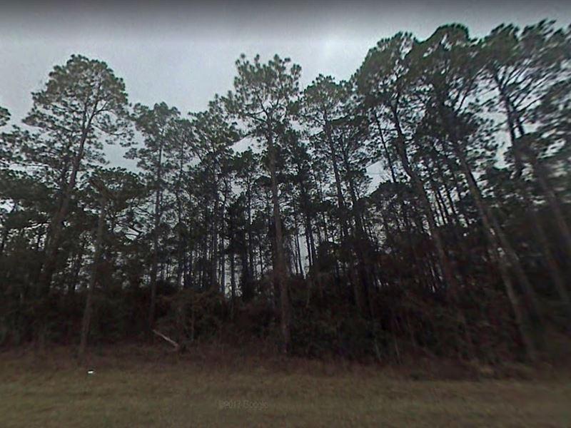 Jackson County, Fl $9,500 : Alford : Jackson County : Florida
