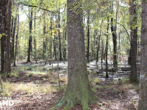 South Montgomery Timber And Hunting : Pike Road : Montgomery County : Alabama
