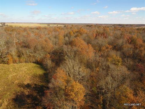 40 Ac, Hardwood Hunting Tract : Pioneer : West Carroll Parish : Louisiana