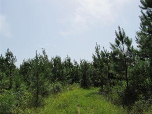39.2 Acres Osyka, Ms, On Pike 93 : Osyka : Pike County : Mississippi