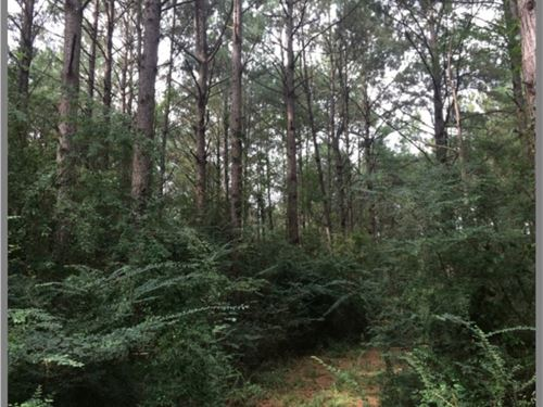 22 Acres With A Home In Smith Count : Taylorsville : Smith County : Mississippi