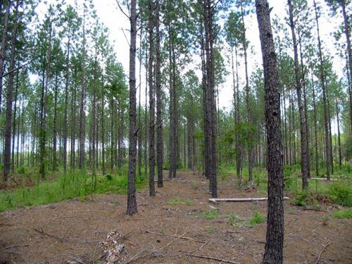 Rock Springs : Glenwood : Laurens County : Georgia