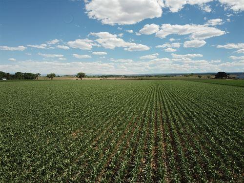 Pea Green Farm : Olathe : Montrose County : Colorado