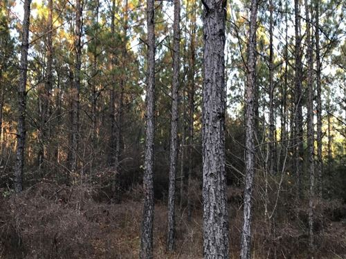 Pinhook Road Timber And Hunting Pro : Butler : Choctaw County : Alabama