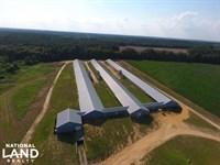 Chicken Breeder Farm : Swansea : Lexington County : South Carolina