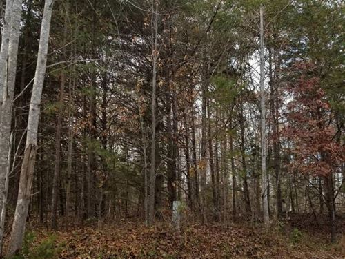 Nice Hunting Spot : Meherrin : Lunenburg County : Virginia