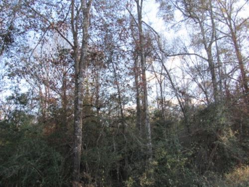 26 Acres Of Mature Timber : Summit : Pike County : Mississippi