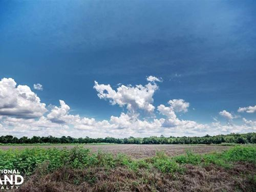 Canton 64 Acre Soybean Farm : Canton : Madison County : Mississippi