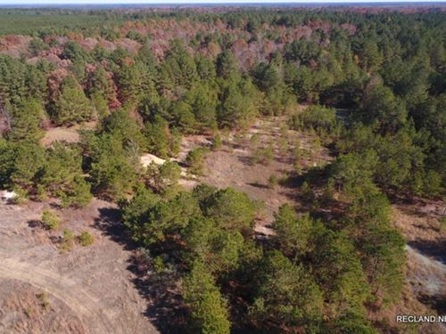 92 Ac, Timberland With Home Site : Fountain Hill : Bradley County : Arkansas