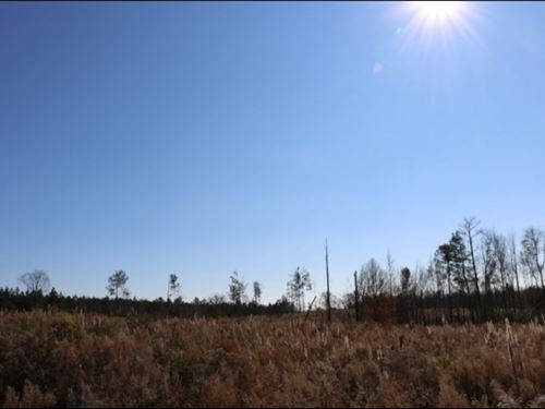 40 Acres In Newton County In Coneha : Conehatta : Newton County : Mississippi