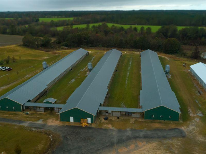 Wilcox County Breeder Farm : Pitts : Wilcox County : Georgia