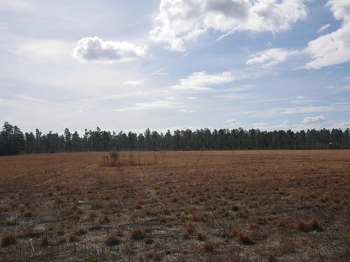 Temple Rd Acreage : Millen : Jenkins County : Georgia