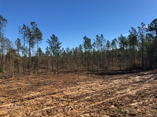 3.33 Acres In Npsd : Summit : Pike County : Mississippi