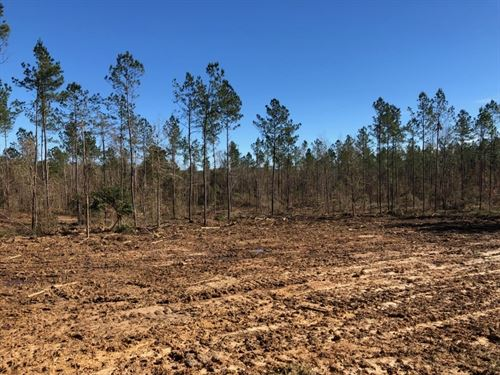 10 Acres In Npsd : Summit : Pike County : Mississippi
