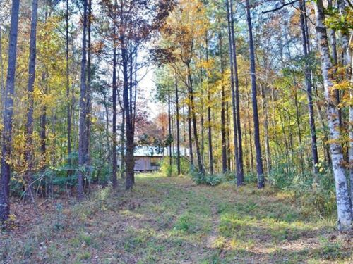 Small Getaway For Sale Cabin, Creek : Summit : Amite County : Mississippi