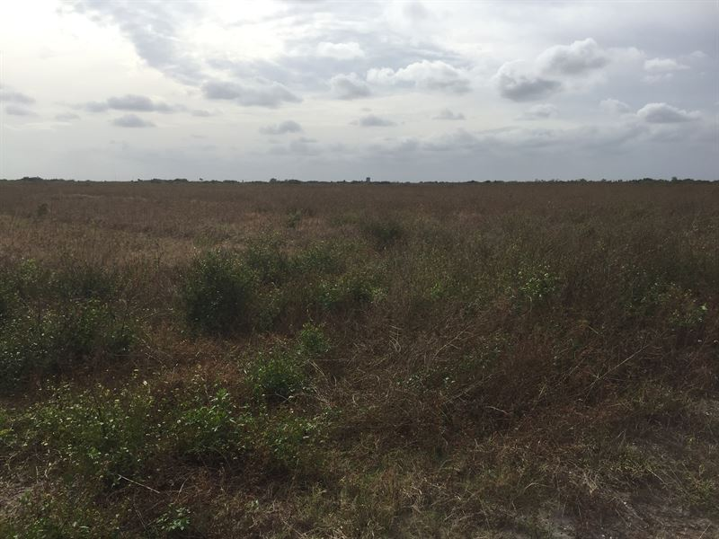 450 Irrigated Farm Acres : Okeechobee : Okeechobee County : Florida