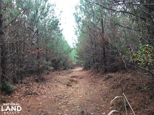 I-22 Hunting & Timber Tract : Hamilton : Marion County : Alabama