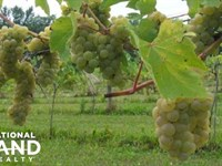 Winery Vineyard Retail Winery/Eve : Rochester : Olmsted County : Minnesota