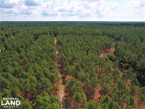 Day Timber Tract : Maysville : Onslow County : North Carolina