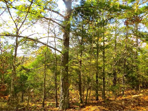 Acreage, Hunting, Homesite : Mammoth Spring : Fulton County : Arkansas