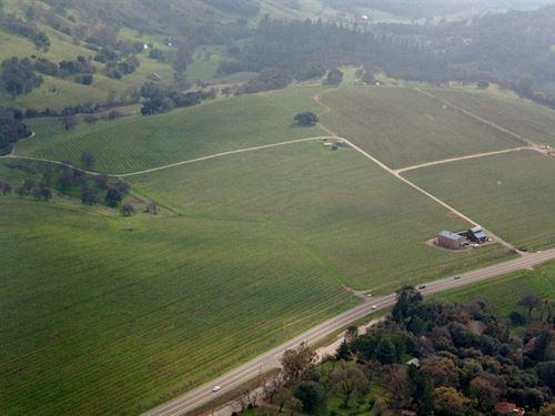 Amador County Vineyard : Sutter Creek : Amador County : California