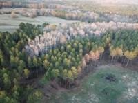 Beautiful 28 Ac Minifarm With Creek : Standing Rock : Chambers County : Alabama