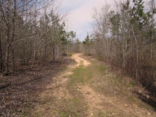 37 Acre Property With Creek : Cragford : Clay County : Alabama