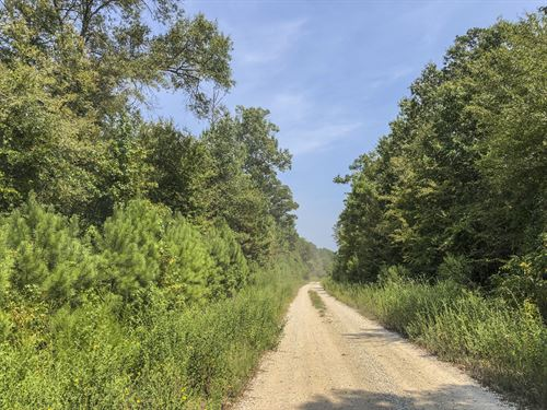 174 Ac Off Spring Ridge Rd : Nacogdoches : San Augustine County : Texas