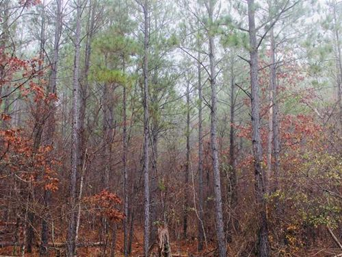 Bodcau Hills Tract, Bossier Parish : Haughton : Bossier Parish : Louisiana