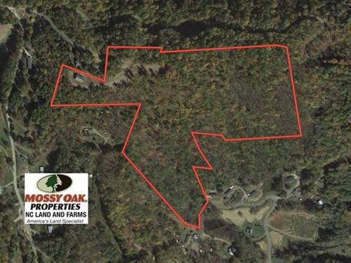 Reduced, 30.96 Acres of Timber an : Burnsville : Yancey County : North Carolina