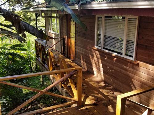 Freshly Remodeled Titled Jungle : Bocas Del Toro : Panama