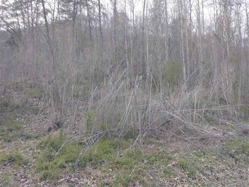 Beautiful Wooded Property : Sneedville : Hancock County : Tennessee