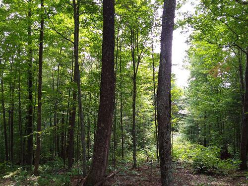 Wonderful Wooded Lot Greystone : Crumpler : Ashe County : North Carolina