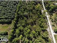 Tropical Pine Island Large Homesite : Bokeelia : Lee County : Florida