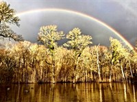 Hunting/Recreational Income Farm : Lewisville : Lafayette County : Arkansas
