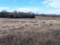 Grovania Farms, 8 Acres : Perry : Houston County : Georgia