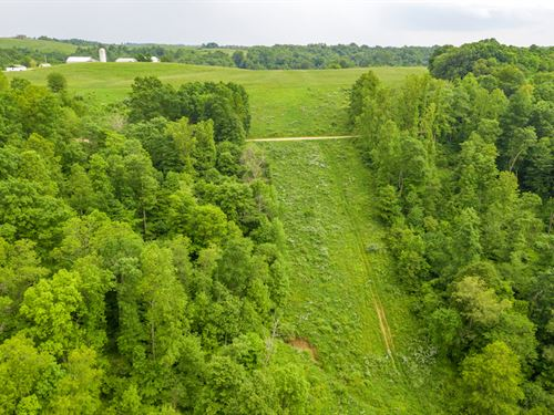 Gravel Lick Rd, 94 Acres : Port Washington : Tuscarawas County : Ohio