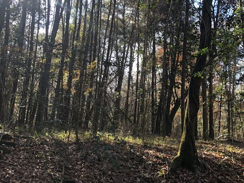 66 +/- Acres Booth Road : Florala : Covington County : Alabama