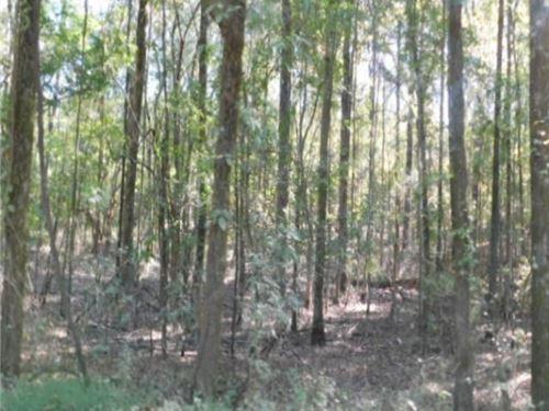 79 Acres In Madison County In Ridge : Ridgeland : Madison County : Mississippi