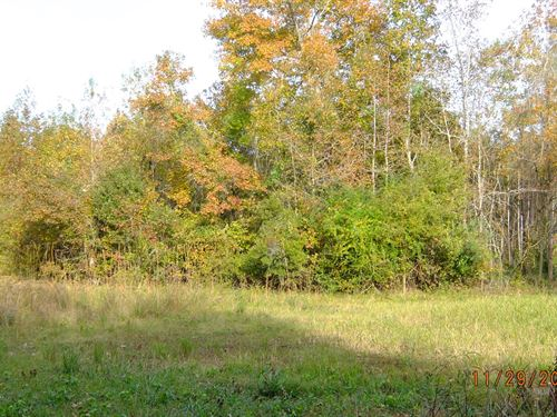 Secluded 10 Acre Land Lot Seabrook : Seabrook : Beaufort County : South Carolina