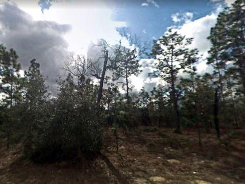 Clay County, Fl $24,000 : Keystone Heights : Clay County : Florida