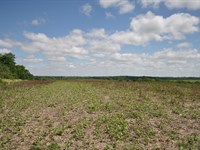 Income Producing Farm Excellent : King City : Gentry County : Missouri