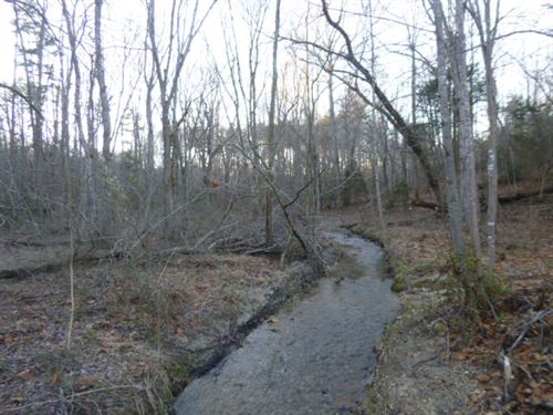 Woods And More Woods : Appomattox : Virginia