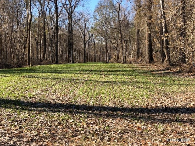 Ownership Share In MS River Hunting : Scott : Bolivar County : Mississippi
