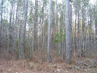 76.2 Acres Cabin Located Oktibbeha : Starkville : Oktibbeha County : Mississippi